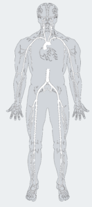 Arterial - Coronaries